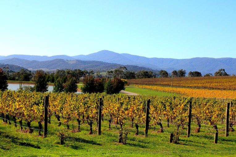 Oakridge Winery 1