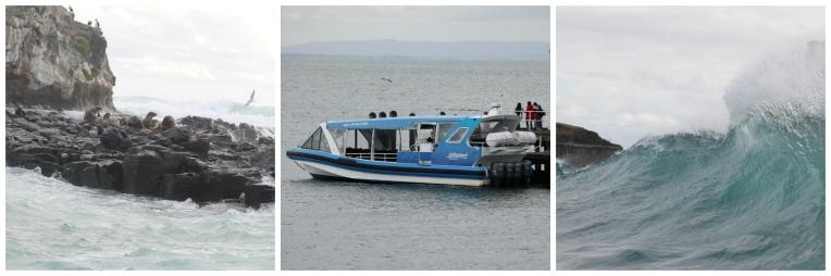 EcoBoat Tour.jpg