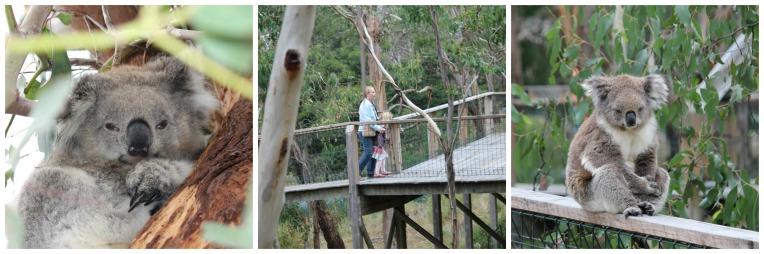 Phillip Island Koala Conservation Centre.jpg