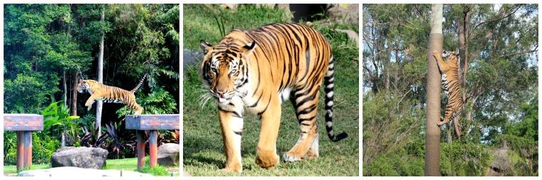 Tiger Island.jpg
